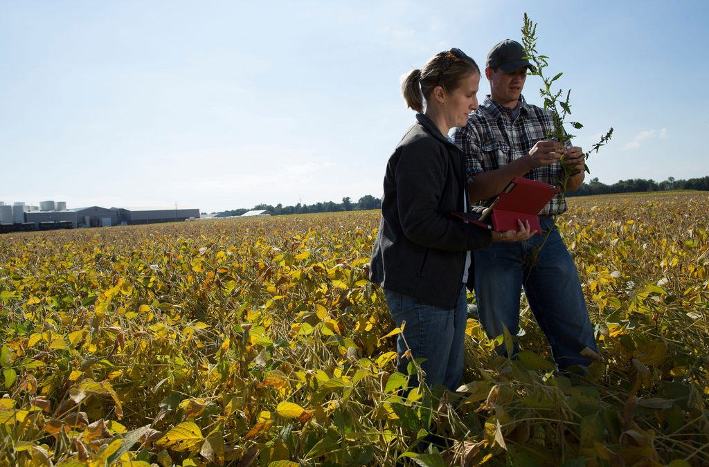 Come diventare imprenditore agricolo – la guida di Social Academy
